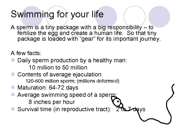 Swimming for your life A sperm is a tiny package with a big responsibility