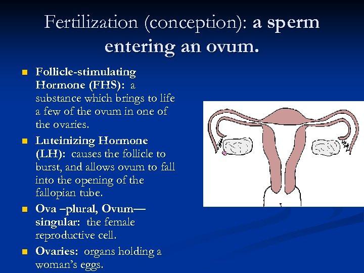 Fertilization (conception): a sperm entering an ovum. n n Follicle-stimulating Hormone (FHS): a substance