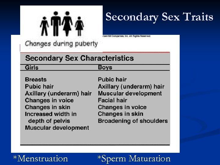 Secondary Sex Traits *Menstruation *Sperm Maturation