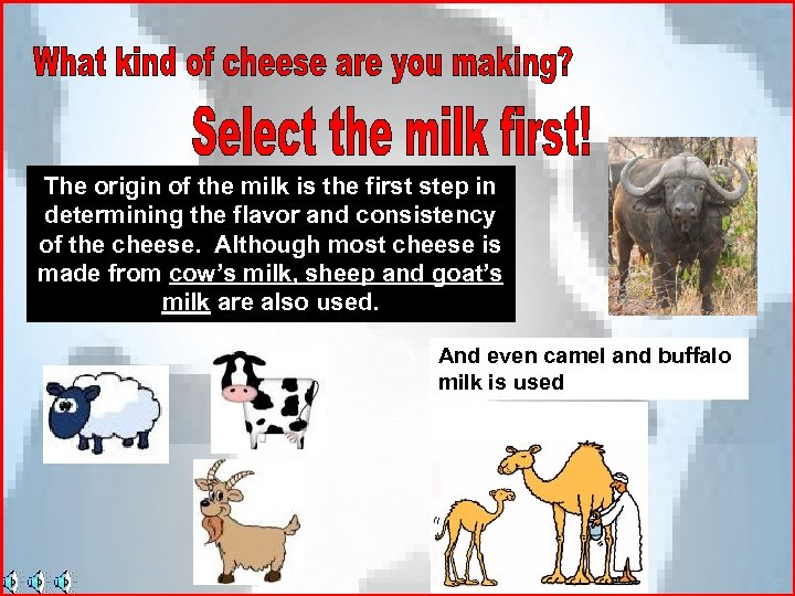The origin of the milk is the first step in determining the flavor and