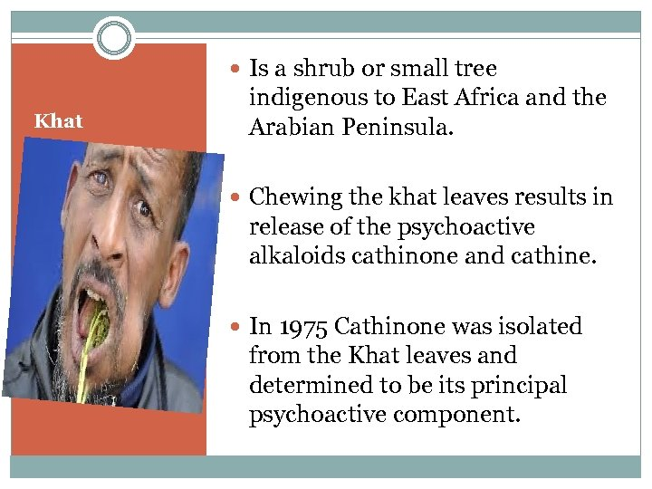 Is a shrub or small tree Khat indigenous to East Africa and the