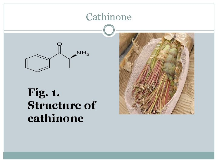 Cathinone Fig. 1. Structure of cathinone