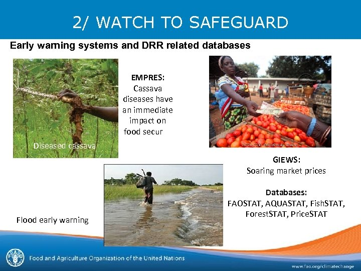 2/ WATCH TO SAFEGUARD Early warning systems and DRR related databases EMPRES: Cassava diseases