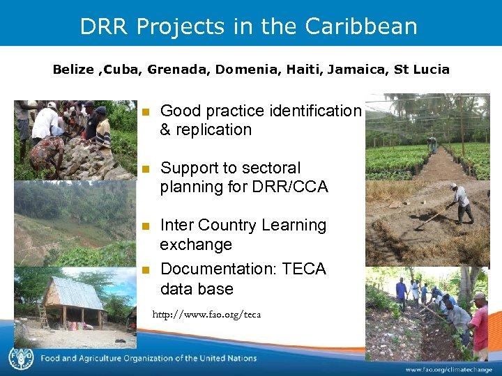 DRR Projects in the Caribbean Belize , Cuba, Grenada, Domenia, Haiti, Jamaica, St Lucia