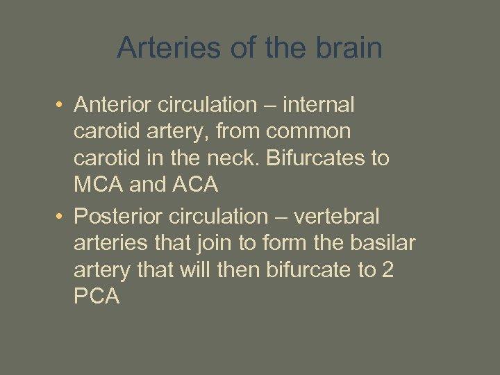 Arteries of the brain • Anterior circulation – internal carotid artery, from common carotid