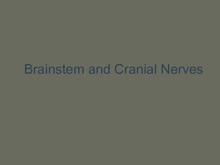 Brainstem and Cranial Nerves