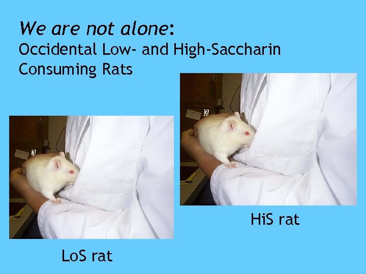 We are not alone: Occidental Low- and High-Saccharin Consuming Rats Hi. S rat Lo.