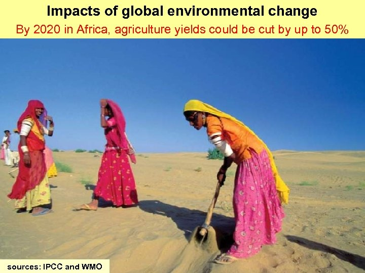 Impacts of global environmental change By 2020 in Africa, agriculture yields could be cut