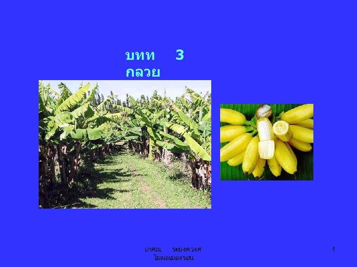 บทท กลวย 3 เกศณ ระมงควงศ ไมผลเมองรอน 1
