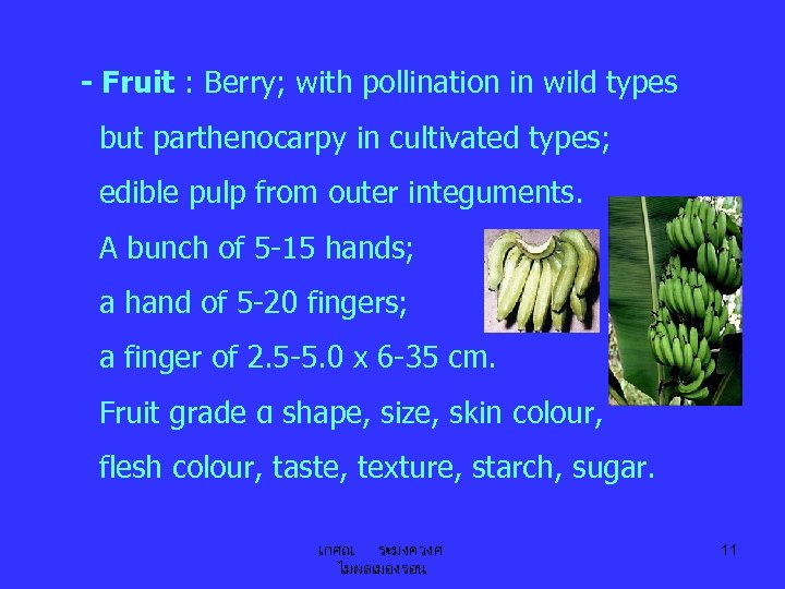 - Fruit : Berry; with pollination in wild types but parthenocarpy in cultivated types;