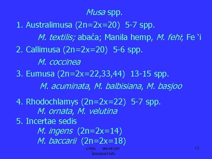 Musa spp. 1. Australimusa (2 n=2 x=20) 5 -7 spp. M. textilis; abaća; Manila