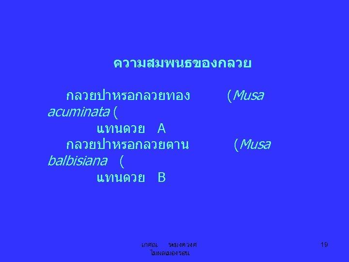 ความสมพนธของกลวยปาหรอกลวยทอง acuminata ( แทนดวย A กลวยปาหรอกลวยตาน balbisiana ( แทนดวย B เกศณ ระมงควงศ ไมผลเมองรอน (Musa