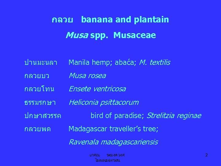 กลวย banana and plantain Musa spp. Musaceae ปานมะนลา Manila hemp; abaća; M. textilis กลวยบว