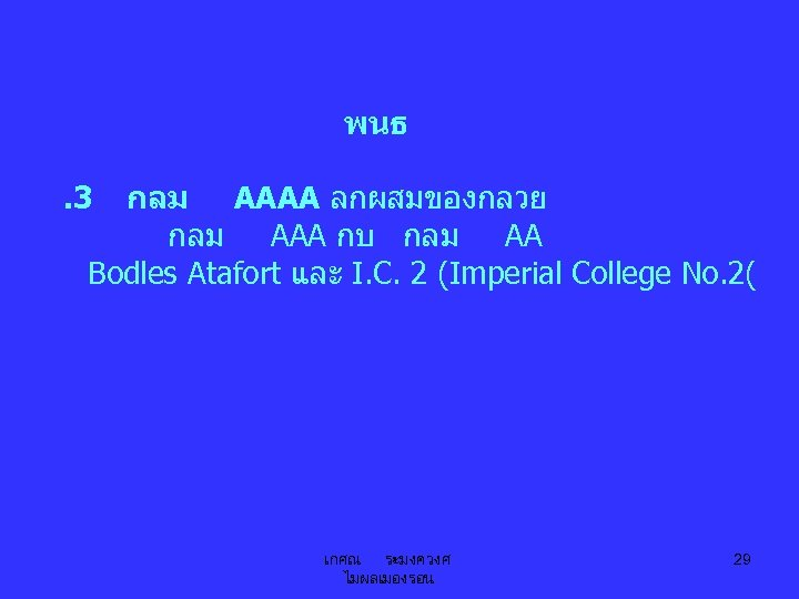 พนธ. 3 กลม AAAA ลกผสมของกลวย กลม AAA กบ กลม AA Bodles Atafort และ I.