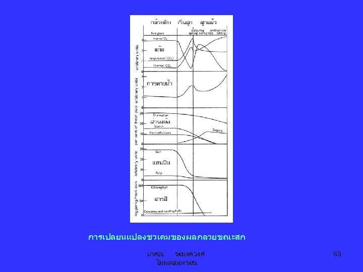 การเปลยนแปลงชวเคมของผลกลวยขณะสก เกศณ ระมงควงศ ไมผลเมองรอน 63