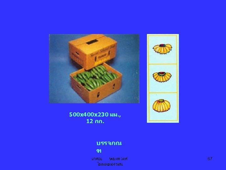 500 x 400 x 230 มม. , 12 กก. บรรจภณ ฑ เกศณ ระมงควงศ ไมผลเมองรอน
