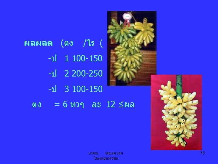 ผลผลต (ตง /ไร ( -ป 1 100 -150 -ป 2 200 -250 -ป 3
