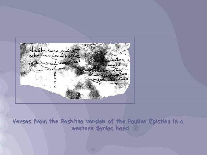 Verses from the Peshitta version of the Pauline Epistles in a western Syriac hand