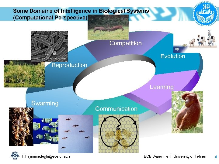 Some Domains of Intelligence in Biological Systems (Computational Perspective) Competition Evolution Reproduction Learning Swarming