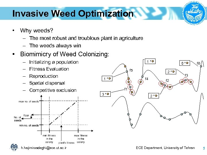 Invasive Weed Optimization • Why weeds? – The most robust and troublous plant in