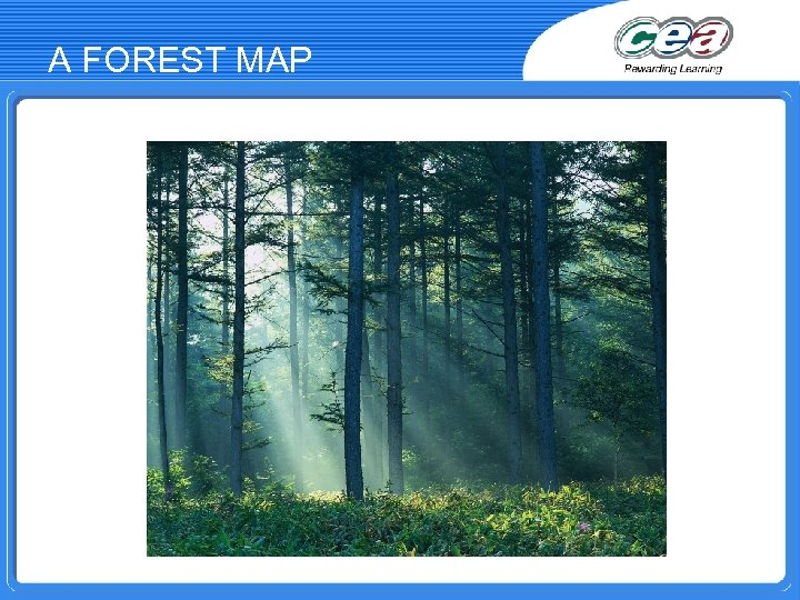 A FOREST MAP