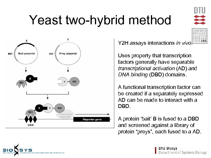 Yeast two-hybrid method Y 2 H assays interactions in vivo. Uses property that transcription