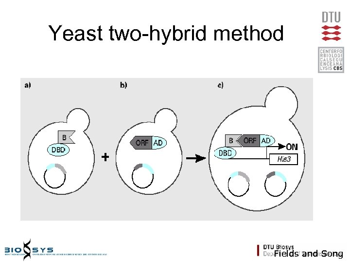 Yeast two-hybrid method Fields and Song