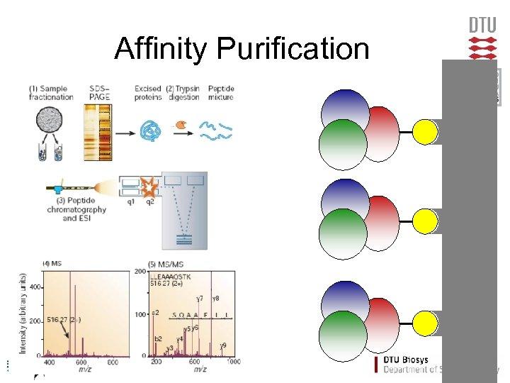 Affinity Purification