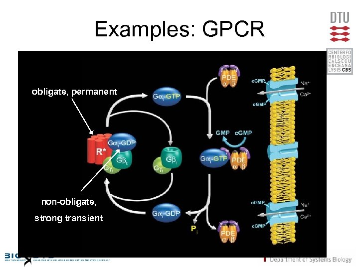 Examples: GPCR obligate, permanent ol non-obligate, strong transient