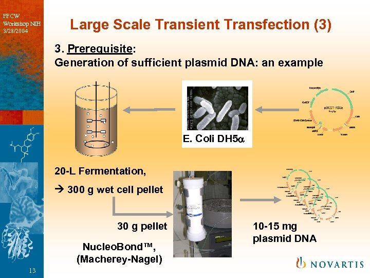 PPCW Workshop NIH 3/28/2004 Large Scale Transient Transfection (3) 3. Prerequisite: Generation of sufficient