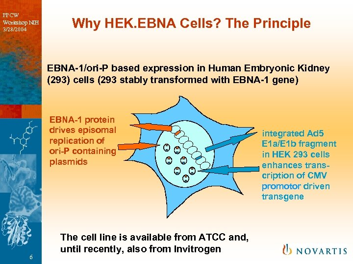 PPCW Workshop NIH 3/28/2004 Why HEK. EBNA Cells? The Principle EBNA-1/ori-P based expression in