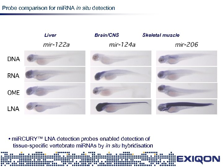 Probe comparison for mi. RNA in situ detection Liver Brain/CNS LNA Skeletal muscle •
