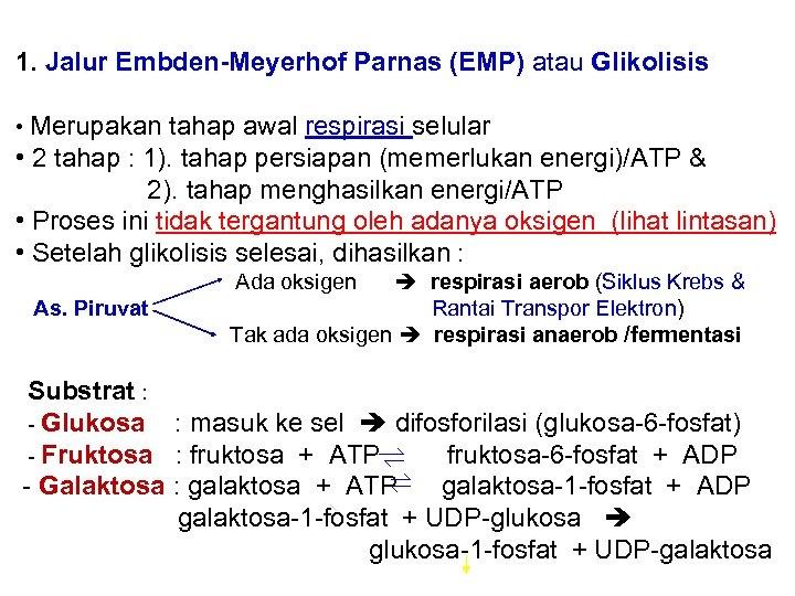 1. Jalur Embden-Meyerhof Parnas (EMP) atau Glikolisis • Merupakan tahap awal respirasi selular •