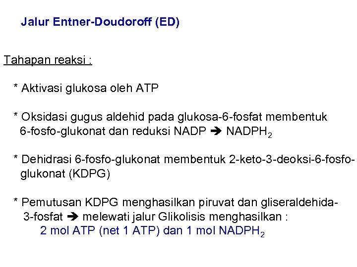 Jalur Entner-Doudoroff (ED) Tahapan reaksi : * Aktivasi glukosa oleh ATP * Oksidasi gugus