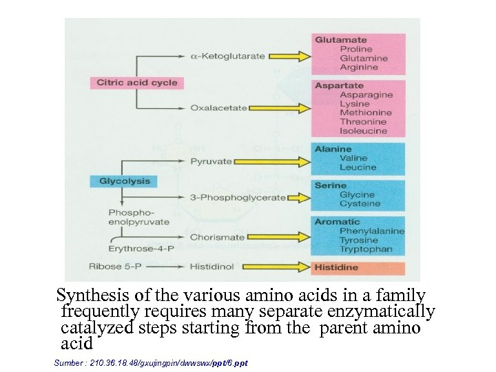 Synthesis of the various amino acids in a family frequently requires many separate