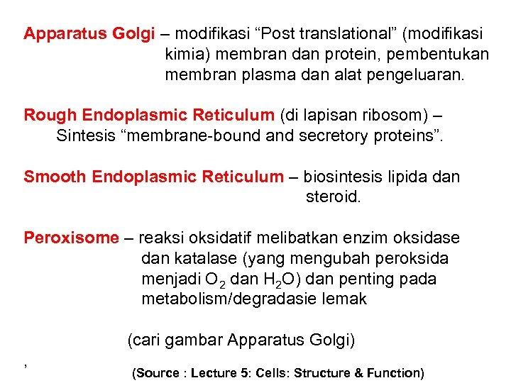 """Apparatus Golgi – modifikasi """"Post translational"""" (modifikasi kimia) membran dan protein, pembentukan membran plasma"""
