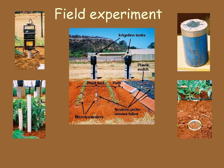 Field experiment Irrigation tanks Plastic mulch Plant bed Microlysimeters Path Neutron probe access tubes
