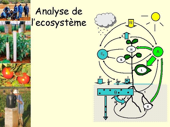 Analyse de l'ecosystème R Et H A Ep S L P Esd Esw I
