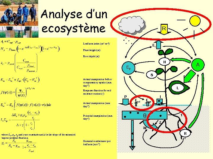 Analyse d'un ecosystème R Leaf area index (m 2 m-2) Et Plant height (m)