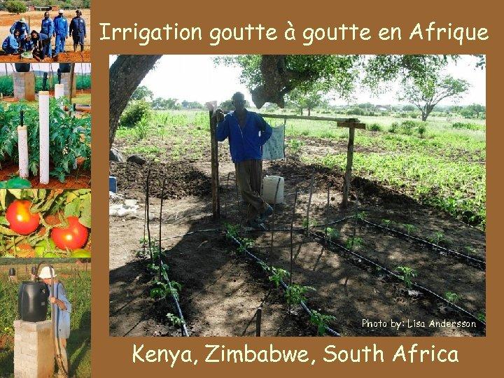 Irrigation goutte à goutte en Afrique Photo by: Lisa Andersson Kenya, Zimbabwe, South Africa