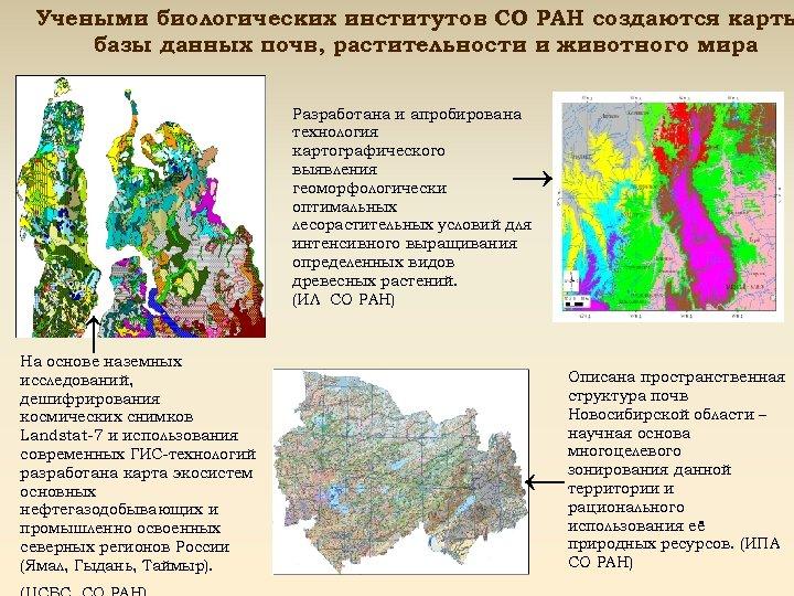 Учеными биологических институтов СО РАН создаются карты базы данных почв, растительности и животного мира