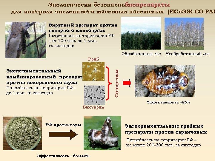 Экологически безопасные биопрепараты для контроля численности массовых насекомых (ИСи. ЭЖ СО РАН Вирусный препарат
