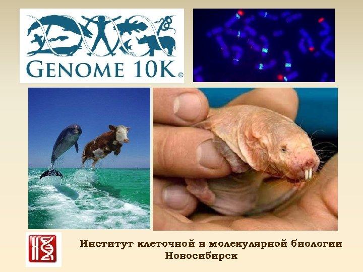 Институт клеточной и молекулярной биологии Новосибирск