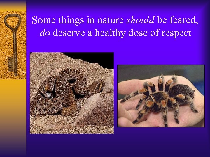 Some things in nature should be feared, do deserve a healthy dose of respect