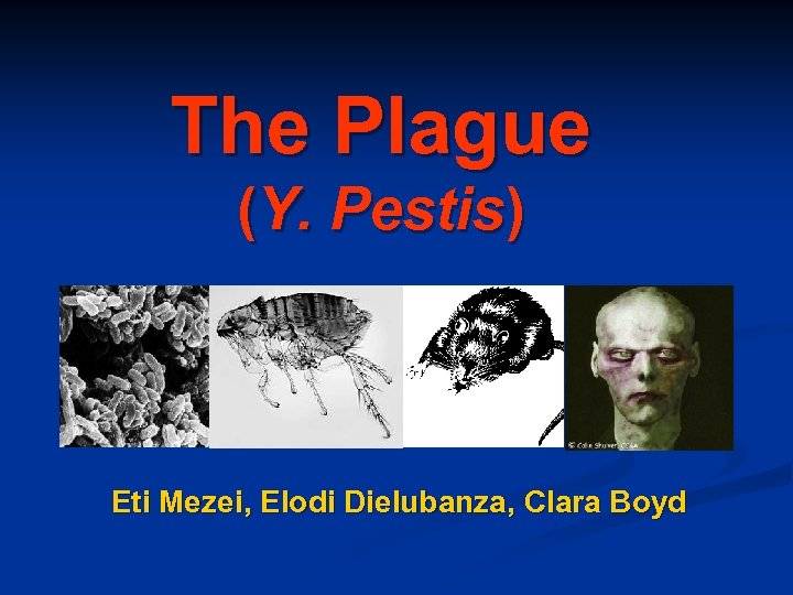The Plague (Y. Pestis) Eti Mezei, Elodi Dielubanza, Clara Boyd