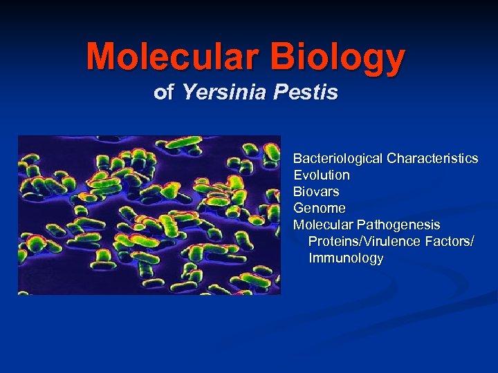 Molecular Biology of Yersinia Pestis Bacteriological Characteristics Evolution Biovars Genome Molecular Pathogenesis Proteins/Virulence Factors/