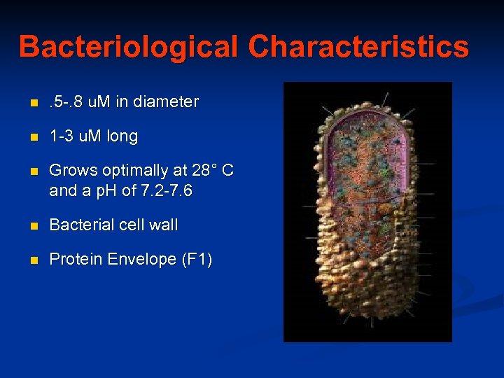 Bacteriological Characteristics n . 5 -. 8 u. M in diameter n 1 -3