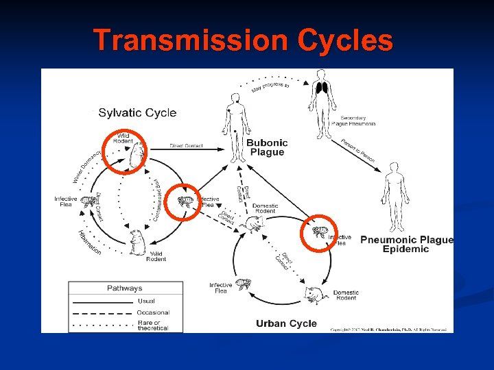 Transmission Cycles