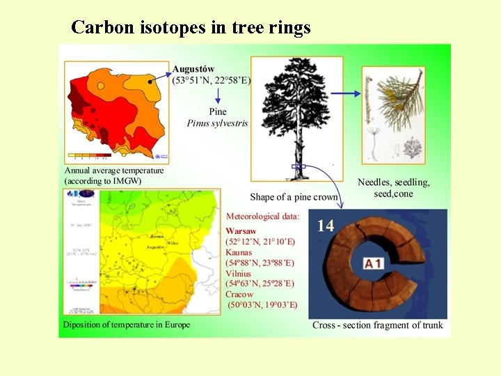 Carbon isotopes in tree rings