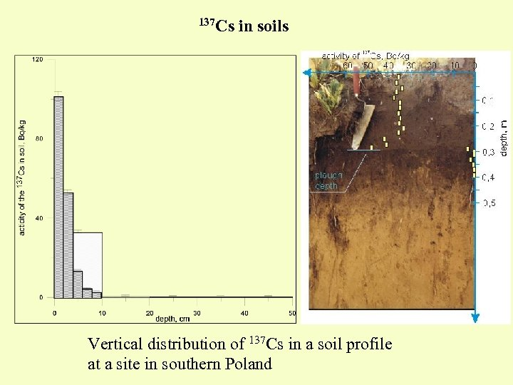 137 Cs in soils Vertical distribution of 137 Cs in a soil profile at